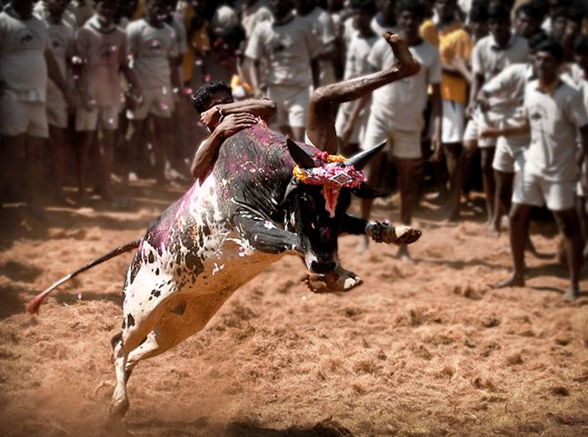 Top 10 Most Dangerous Sports in the World - Bull Riding