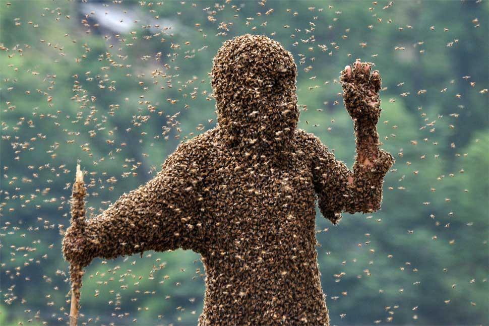 bee wearing
