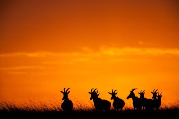 masai-mara-goldstein-12