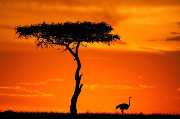Stunning Sunsets and Sunrises On The Masai Mara