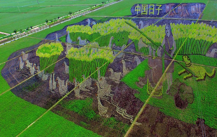 Chinese Farmers Turn Rice Fields Into Enormous Works Of Art