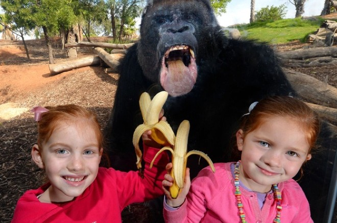 41 Incredibly Hilarious Animal Photobombs