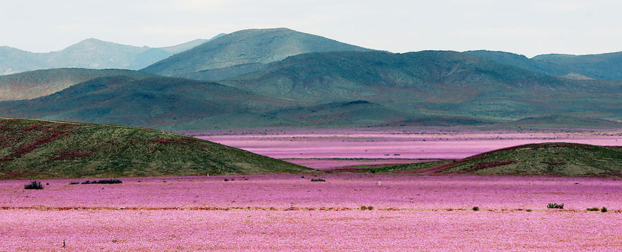 When Rain Falls On The Earth's Driest Desert