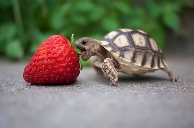 Photos Of Animals Eating That'll Make You Smile - 12