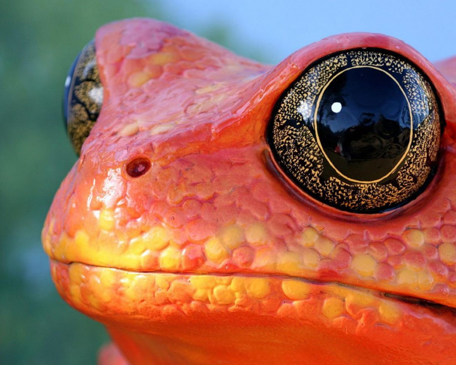 Beautiful frog eyes