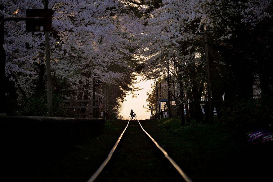 17 Magical Pics Of Japan's Cherry Blossom By National Geographic