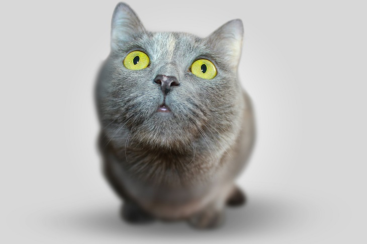 Amazing Cat Facts – Everything  You Need To Know About Cats