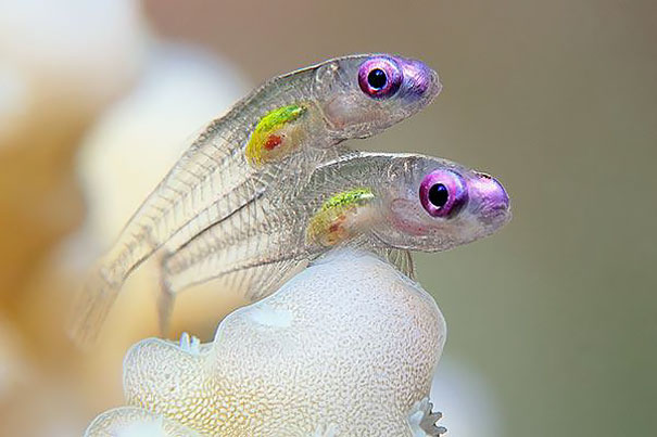 transparent animals